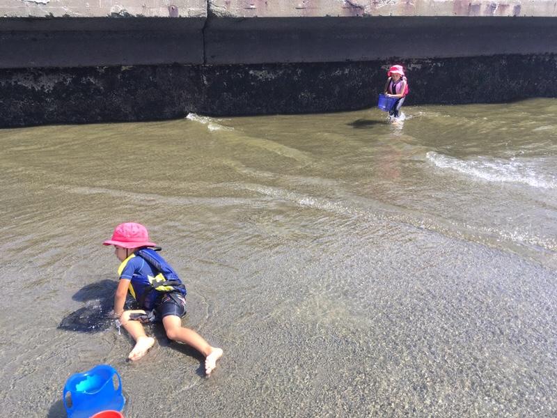 検見川浜で磯遊び中